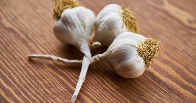 Garlic as a medicine and spice